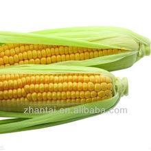 yellow corn importers in malaysia