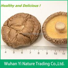 Wholesale Shiitake Mushroom