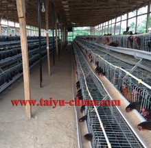 TAIYU 120 Bird and 160 Birds Chicken Cages For Zimbabwe Poultry Farms