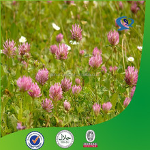 anti cancer red clover leaf extract for antibiotic manufacturer