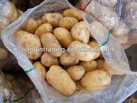 fresh long shape potato