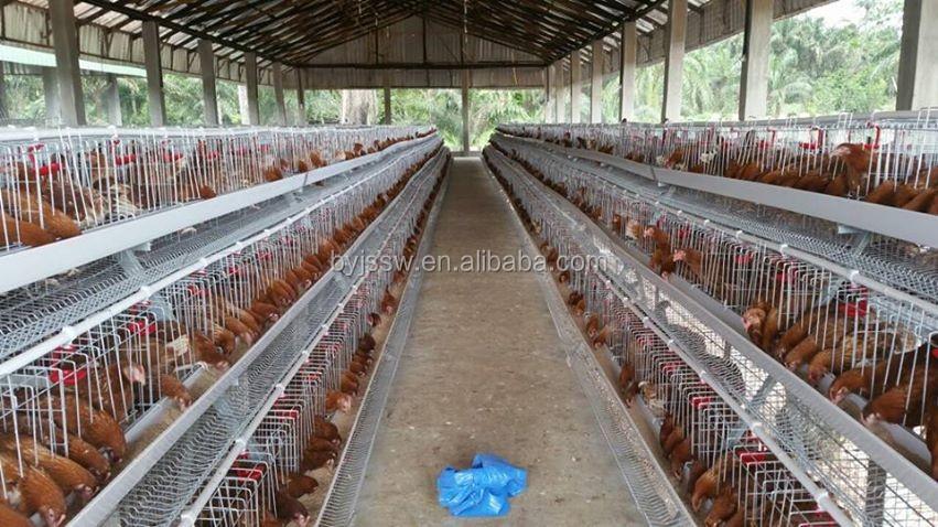 chicken cage-593.jpg