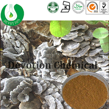 100% natural Yunzhi Mushroom Extract Powder/Coriolus Versicolor Extract