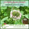 Top quality red clover seeds ready sstock,red clover exporter,red clover cheap seeds