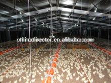 Nosotros somos buenos en la prefabricación estructuras de acero para casas de pollos y cobertizos de pollo y granjas alimentación pollos