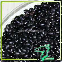 Dried Bulk Black Kidney Beans / BKB Wholesales Size/100g 440-460pcs Chinese Bean Exporters