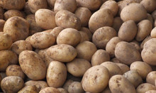 Pakistani Fresh Potatotes