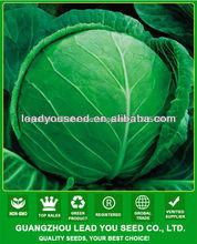 JC54 alto rendimiento y repollo <span class=keywords><strong>híbrido</strong></span> semillas de semillas de hortalizas