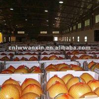 2012 new crop fresh honey pomelo