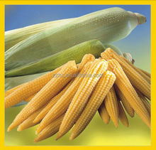 Canned Corn Ingredients Canned Baby Corn Health Food