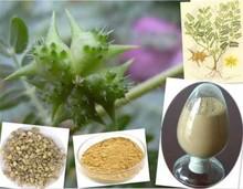 Natural Tribulus Terrestris Extract Saponins 90%