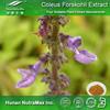 High Quality Coleus forskohlii Briq P.E./Coleus forskohlii Briq PE