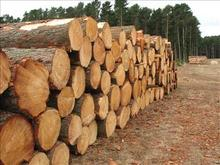 Tali Logs Timber , Tali round logs