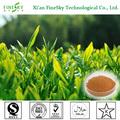 El mejor té verde natural de extracto de polifenoles, extracto de té verde egcg