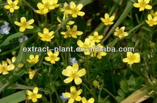 100% natural Ranunculus ternatus Thunb P.E