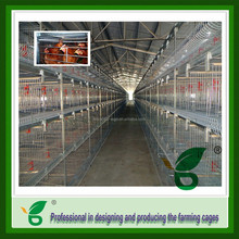 full automatic h frame broiler chicken cage sold abroad