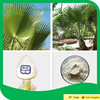 100% Natural top quality Saw Palmetto extract Fatty acid/Sabal Fruit Extract