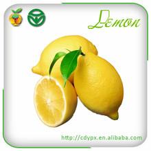 fresh lemon fruits importers
