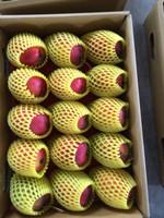 Fresh Mango-Apple Mango