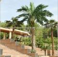 china fazer palmeiras artificiais médio oriente palmeira