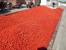 tomato paste in aseptic bag