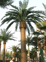 2015 hot sale 9 meter cheap big high artificial fake hand-made date seaweed palm tree for indoor or outdoor using