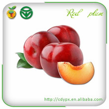 Red Plums/ Juicy/sweet