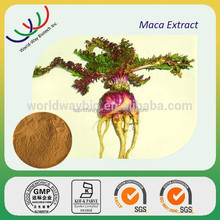 Medicine for long time sex maca extract /maca root powder