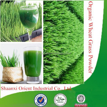 100% Natural & organic wheat grass juice powder, factory supply wheat grass powder, organic wheat grass powder