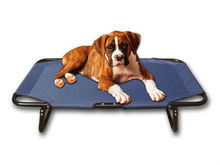 metal frame Pet dog bed supply and manufacturer wholesale iron pet bed for dogs