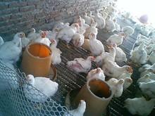 Toltrazuril, poultry api,CAS 69004-03-1