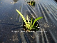 supply plastic agriculture mulch film with all kinds of packing
