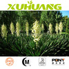 Best selling Yucca Extract Powder &30%, 40%, 50%, 60% UV
