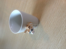 Ceramic animal shaped drinking cup