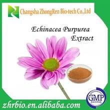 Best quality of enhancing immunity echinacea purpurea extract 4% polyphenols