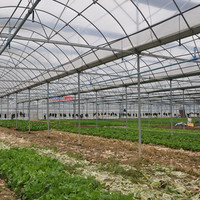 10-year warranty 100% bayer reinforced plastic agriculture greenhouse for sale