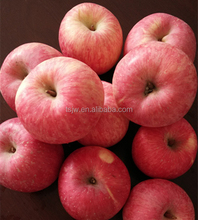 Red Color Fuji apple Fresh Style fruits fresh fuji apple fruit for sale