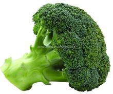 Estratto di semi di broccoli, broccoli germoglio estratto, broccoli e p