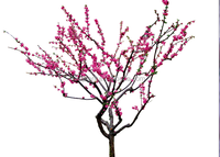 Hot sale Products artificial peach blossom flower plastic peach blossom plant flower simulation fake silk blossom flowers
