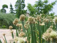 High Organic Nitrogen 15% Free Salt Fertilizer