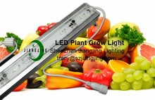 Professional Manufacture 12V LED Grow light for herbs growing