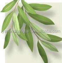 GMP certificated manufacturer supply competitive price organic Olive Leaves extract powder