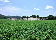 Biological organic bacterial fertilizer for Tobacco/tabacum/nicotiana