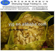 2014 new crops fresh ginger 250g pvc packing