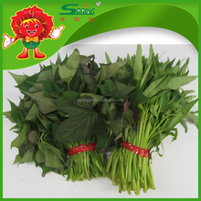 2015 green leafy vegetables fresh Sweet potato leaves