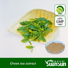 Pure natural herb extract/ green tea extract/green tea extract powder