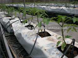 Coco Peat Grow Bag An Organic Material For Plant Growth