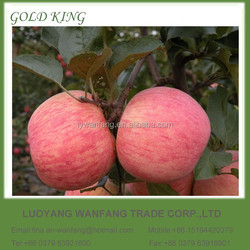 Yantai Apple Fruit Factory Price