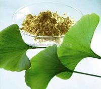 High Quality Ginkgo Biloba Extract 24.0% Flaones; 6.0% Lactoes CA90045-6-6