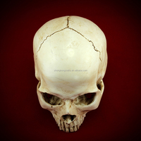 Wholesale 1:1 real human skeleton for sale